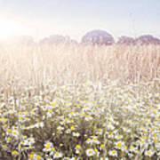 Sunshine Over The Fields Art Print