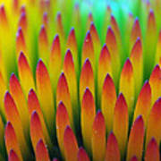 Super Macro Of Echinacea Cone Flower Art Print