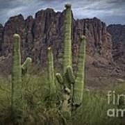Superstitious Cactus II Art Print