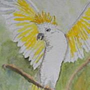 Suphar Crested Cockatoo Art Print