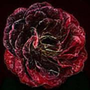 Supreme Rose Art Print