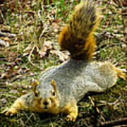 Surprise Mister Squirrel Art Print