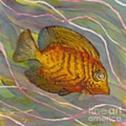 Surgeonfish Art Print