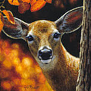 Whitetail Deer - Surprise Print by Crista Forest