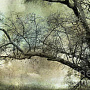 Surreal Gothic Dreamy Trees Nature Landscape Print by Kathy Fornal