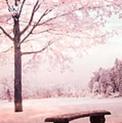 Surreal Infrared Dreamy Pink And White Park Bench Tree Nature Landscape Art Print