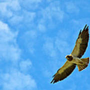 Swainson's Hawk Snake River Birds Of Prey Natural Conservation Area Art Print