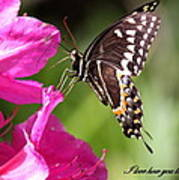 Swallowtail And Azalea - Love Art Print