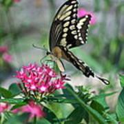 Swallowtail Butterfly 01 Art Print
