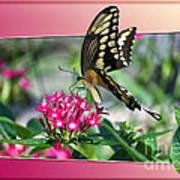 Swallowtail Butterfly 02 Art Print