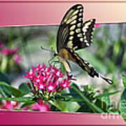 Swallowtail Butterfly 03 Art Print