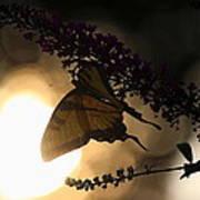 Swallowtail Light Art Print