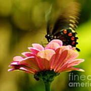 Swallowtail Motion Art Print
