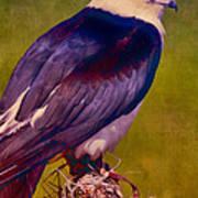 Swallowtail Pose Art Print
