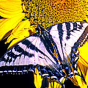Swallowtail Sunflower Art Print