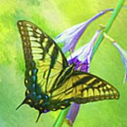Swallowtail Visits Hosta Flowers Art Print