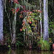 Swamp Beauty Art Print