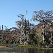 Swamp Serenity Art Print