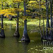 Swamp Color Art Print