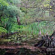 Swamp Garden Art Print