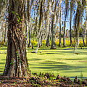 Swamp In Magnolia Plantation And Gardens Charleston Sc Art Print