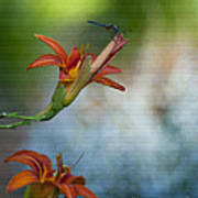 The Wood Lily And Dragon Fly Art Print