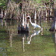 Swamp Reflections Art Print