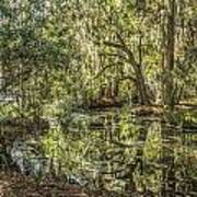 Swamp Reflections Art Print