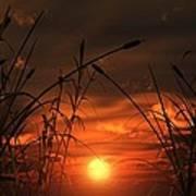 Swamp Sunset  Art Print