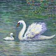 Swan And One Baby Art Print