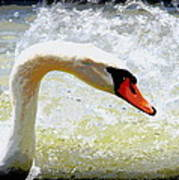 Swan - Beautiful - Elegant Art Print