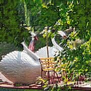 Swan Boats Art Print