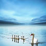 Swan Family On The Lake Art Print