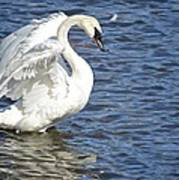 Swan Feather Art Print