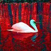 Swan In Red Art Print