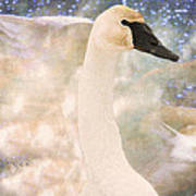 Swan Journey Art Print by Kathy Bassett