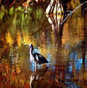 Swan Lake Heron II Art Print