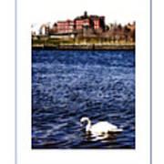 Swan Lake Poster Art Print
