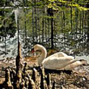 Swan Lake Watercolor Art Print
