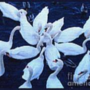Swan Party Art Print