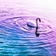 Swan Ripples Art Print