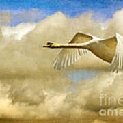 Swan Song Art Print by Lois Bryan