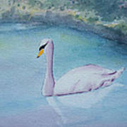 Swan Study Art Print