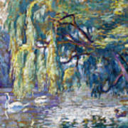 Swans Family . Forest Of Boulogne  Art Print