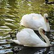 Swans In Love Art Print