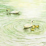 Swans In St. Pierre Art Print
