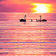 Swans On The Lake Art Print by Jon Neidert