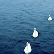 Swans On The Vltava River, Prague Art Print