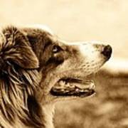 Sweet Doggie Art Print