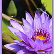 Sweet Dragonfly On Purple Water Lily Art Print